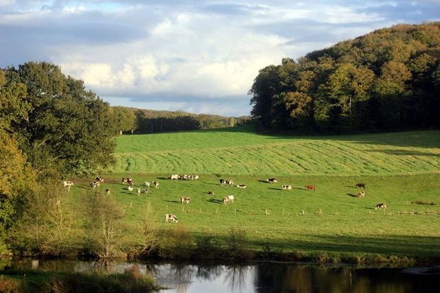 森永ロングライフ牛乳の産地や成分